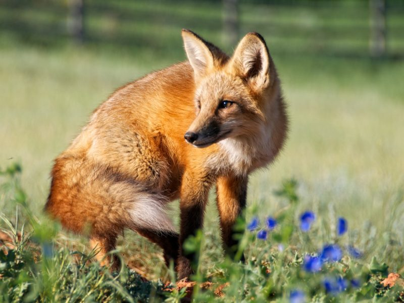 What To Do If You Find An Injured Wild Animal