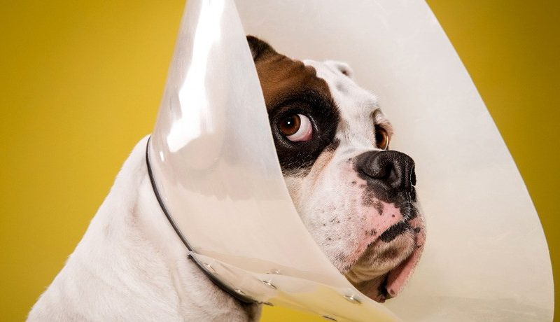 How Much Does It Cost To Neuter Or Spay Your Dog?