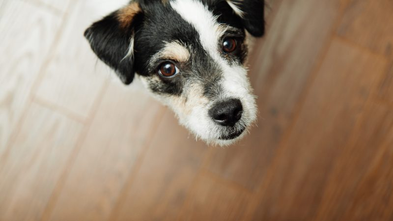 Housebreaking Puppies And Dogs